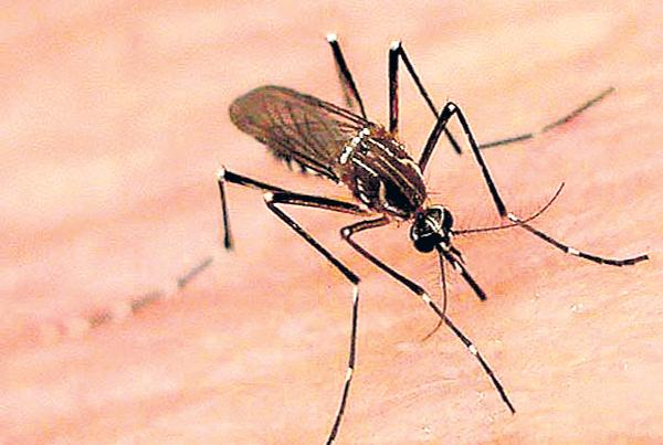 Dengue High Risk Districts was 14 - Sakshi
