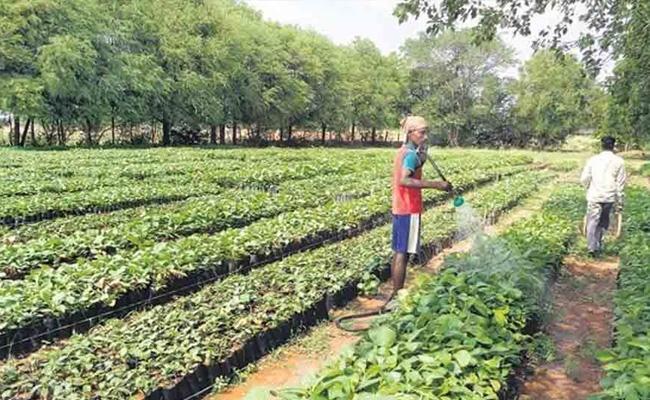 Telangana Government Haritha Haram Program In Warangal - Sakshi