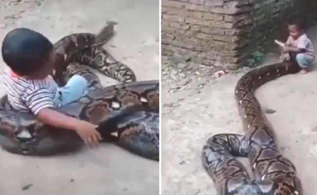 Kevin Pietersen Posts Video of Kid Trying to Play With a Huge Snake - Sakshi