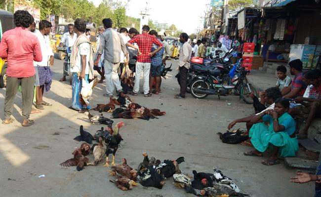 Rooted Chicken Price Is  Equal To Mutton Price - Sakshi