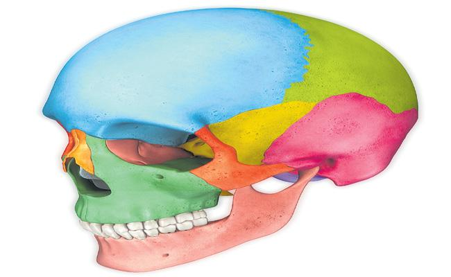 Spikes In The Back Of Skulls Because Use Of Smartphones - Sakshi