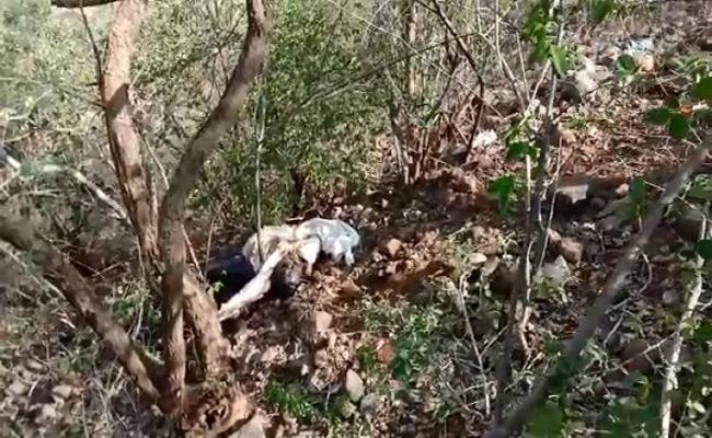 Couple Killed By Driver In Vikarabad District - Sakshi