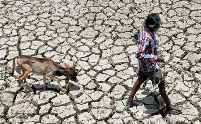 Severe Drought Hits Karnataka  - Sakshi