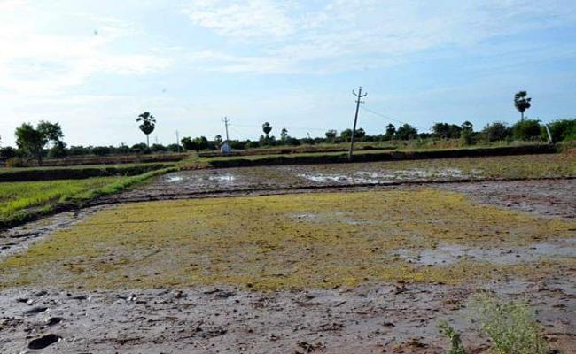 Farmers Waiting For Rain Mahabubnagar - Sakshi