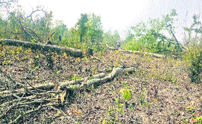 Wood Smuggling In Khammam Forest - Sakshi