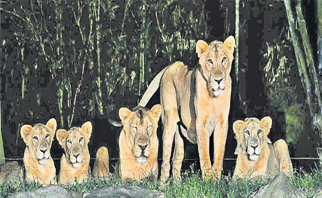 HMDA Delayed on Night Safari Park in Kothwalguda - Sakshi