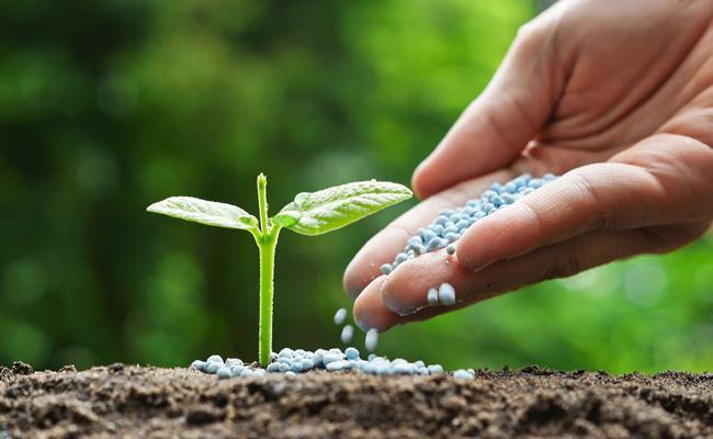 Fertilizer And Pesticide Distribution In Mahabubnagar - Sakshi