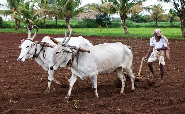 Preparing For Kharif Cultivation - Sakshi