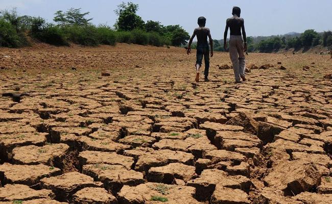 Food Grain Production Has Fallen - Sakshi