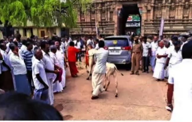 Cow Chases Minister Duraikannu In Kumbakonam - Sakshi