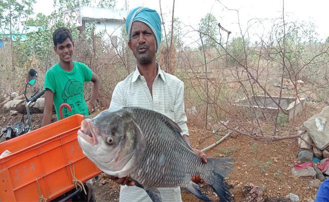 13 KGs Fish In Kinnerasani Reservoir  - Sakshi