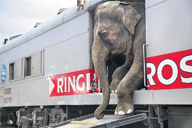 Elephants from Assam to endure a 70-hour journey to participate in religious function in Gujarat  - Sakshi