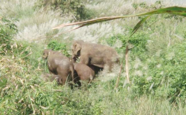 Elephants Attack on Basangi Corps Vizianagaram - Sakshi