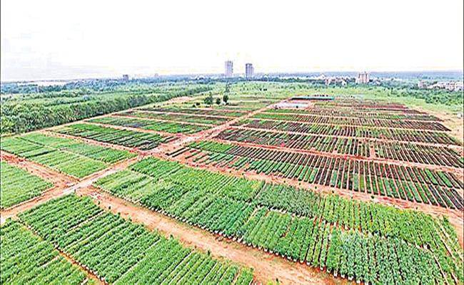 HMDA Planning Haritha Haram With 14 Lakhs Plants - Sakshi