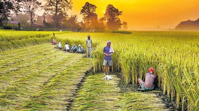 Modi govt notifies extension of benefits to all 14.5 crore farmers - Sakshi