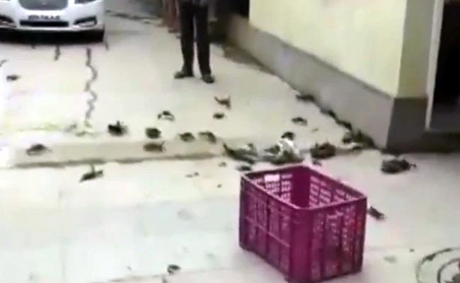 Crabs outside minister Tanaji Sawant house after he blames them for Tiware dam breach - Sakshi