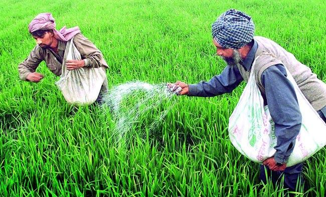 Fertilizer subsidy will be directly in bank account of formers - Sakshi