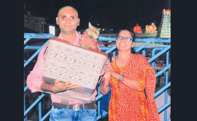 Couple Searching For Cat in Renigunta Railway Station - Sakshi