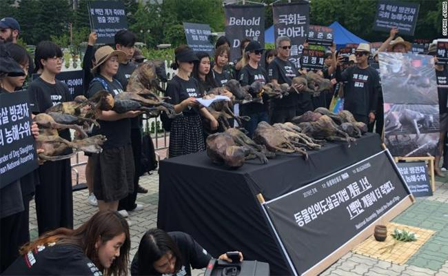 Protest Against the Dog Meat Trade in Seoul - Sakshi