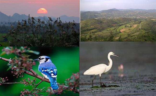 Migration Of  Foreign Birds To Ichapuram In Rainy Season - Sakshi