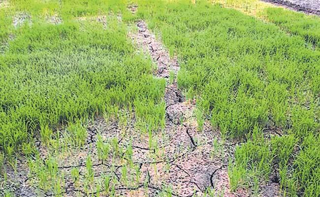 No Rains In Telangana So Government Suggests Alternative Crops - Sakshi