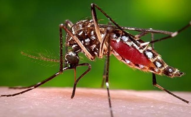 Dengue Fever Effect in Hyderabad - Sakshi