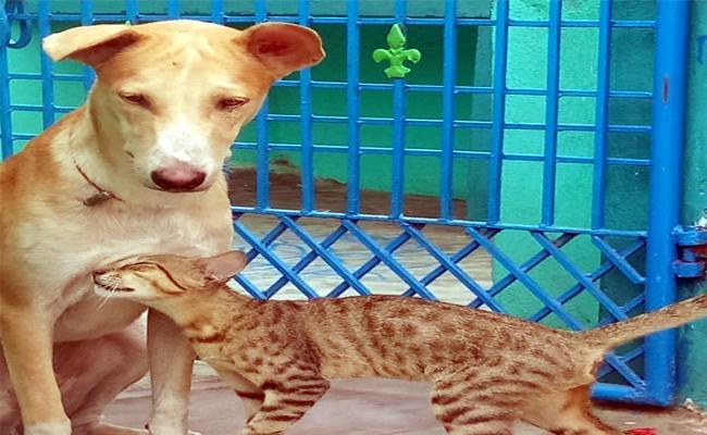 Cat And Dog Be A Good Friends At Palakonda,Srikakuklam - Sakshi