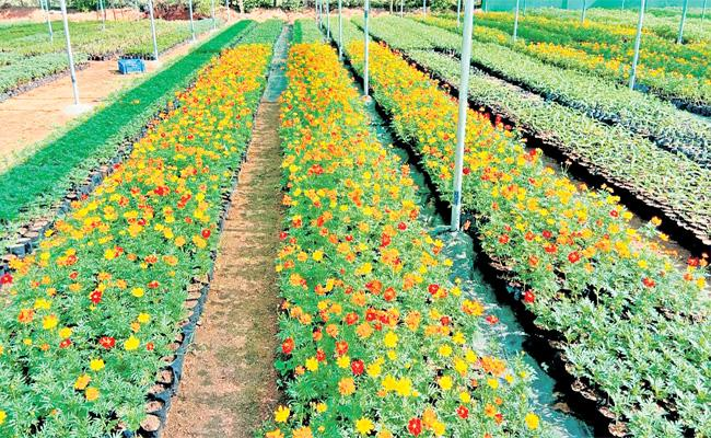 Plants Distribution Soon in Hyderabad Haritha Haram - Sakshi