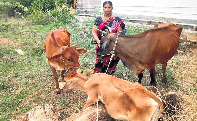 Chittoor Women Dairy Farming Special Story - Sakshi