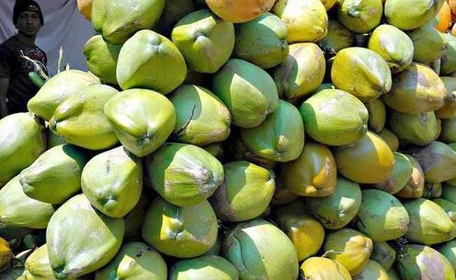Palakollu Coconut Prices Are Dropped In West Godavari - Sakshi