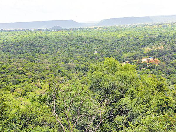 Green Signal for uranium exploration in the forests of Amrabad - Sakshi