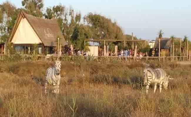 Donkeys Painted To Look Like Zebras For Safari Themed Party - Sakshi