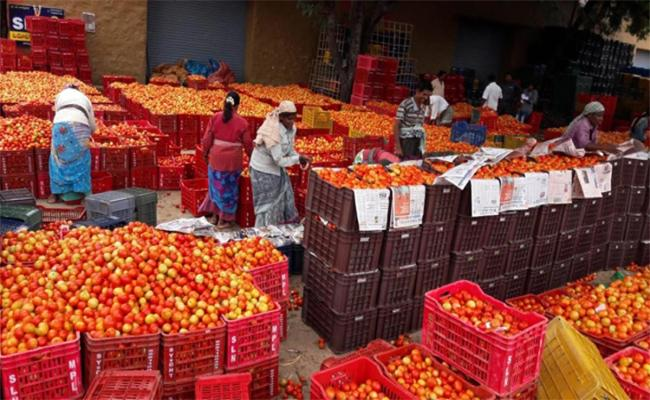 Farmers Vulnerable To Exploitation In The Tomato Market - Sakshi