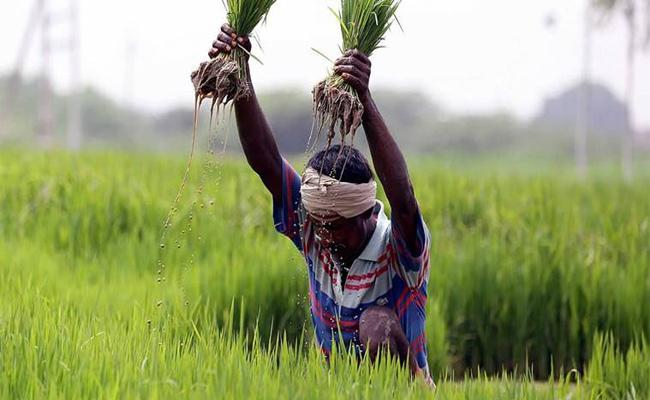 The AP Cabinet Approves Draft Bill Which Helps The Tenant Farmers - Sakshi