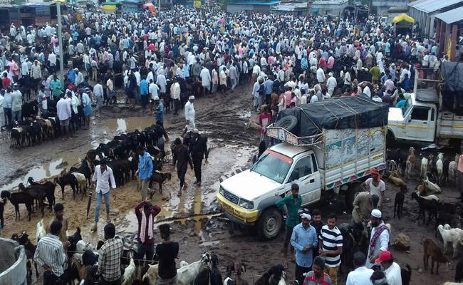 Trading in Crores in Navipet Goats Market - Sakshi