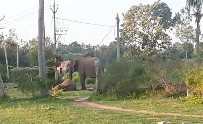 The Elephants Death By Electrocution - Sakshi