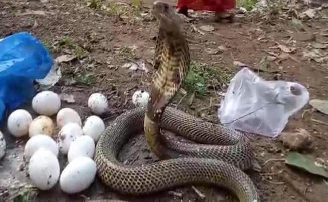 Does Snakes drink Milk! - Sakshi