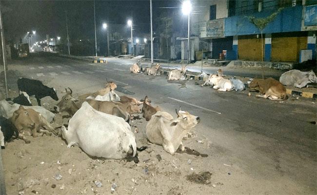 Animals On Road In Tekkali Srikakulam - Sakshi