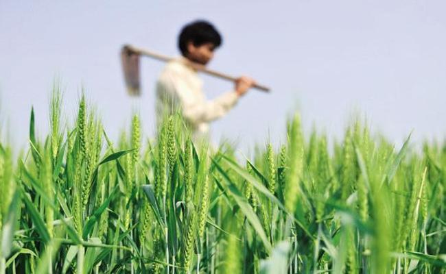 Farmers Still Unaware Of YSR Free Crop Insurance Scheme In Guntur District - Sakshi