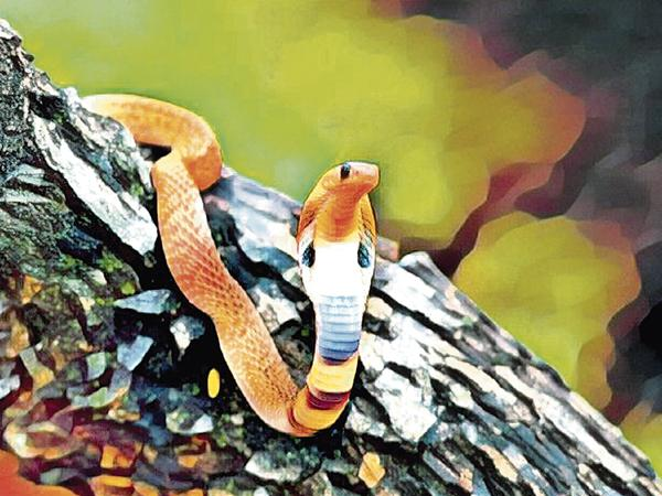 Snakes attack in the City - Sakshi