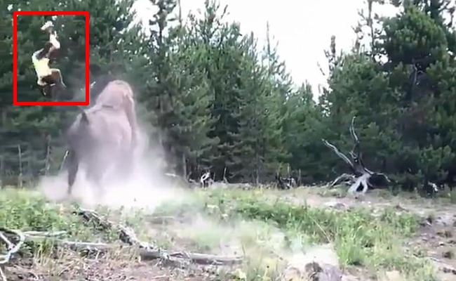 Bison Hits  9 Year Old Girl at Yellowstone National Park - Sakshi