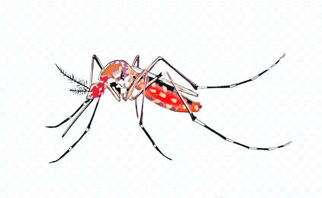 Monsoon Diseases By Mosquito - Sakshi