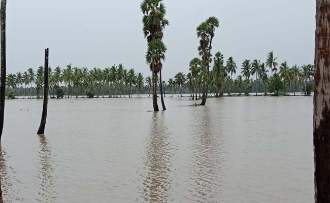 Heavy Rain Fall In West Godavari District - Sakshi