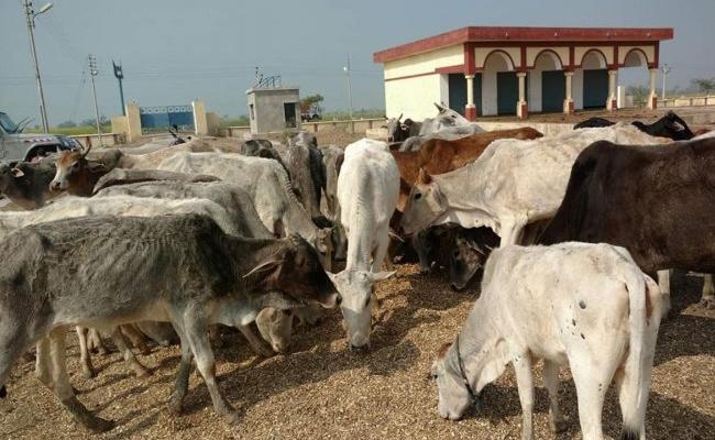 Six Held For Cow Slaughter At BSP Leader Farm In Uttar Pradesh - Sakshi