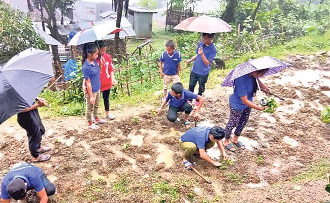 My School My Farm Mizoram IAS Officer Shashanka Ala Mizoram IAS Officer Tackles Malnutrition - Sakshi