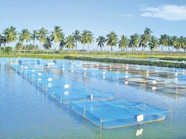 YS Jagan mohan Reddy Gift to the Aqua Farmers - Sakshi