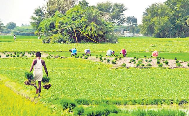 How Much Budget Allocated To Agriculture - Sakshi
