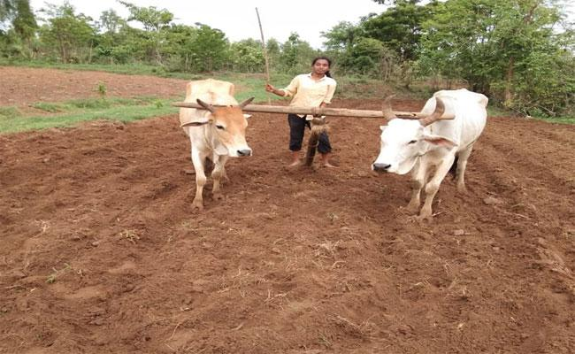 Girl Will Get Into Agriculture Field When There Was A Holiday For School In Aswaraopeta, Khammam - Sakshi
