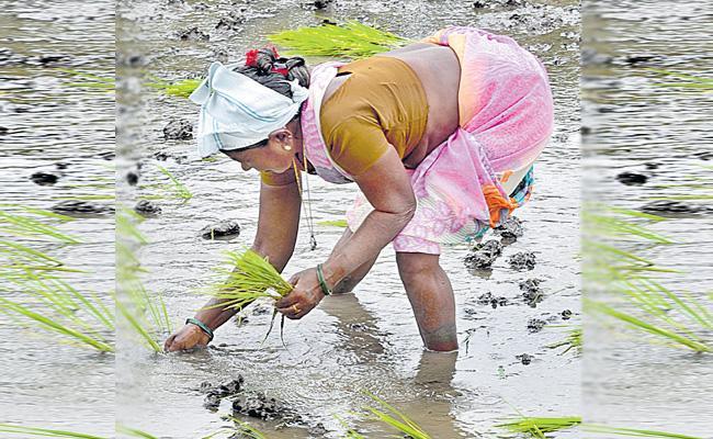 Farmers Happy With Rains In Telangana - Sakshi