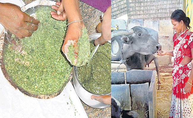Leaves Feeding Good For Dairy Fa - Sakshi